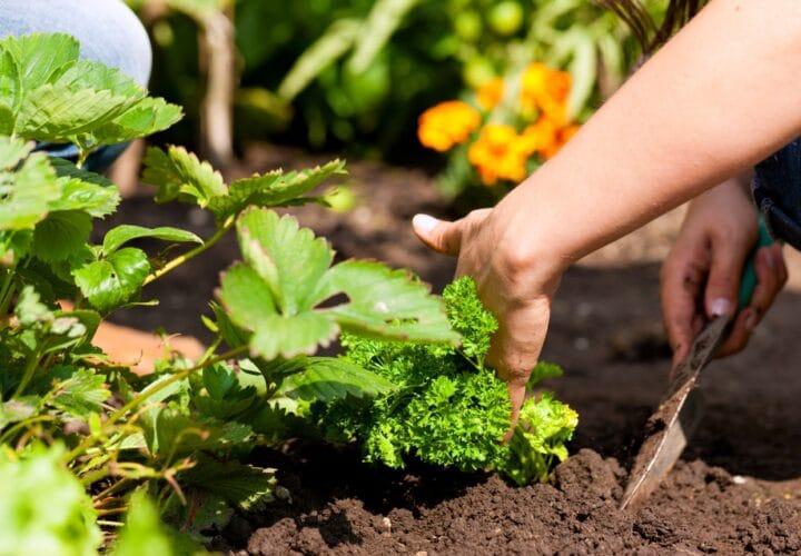 everyday-activity-gardening
