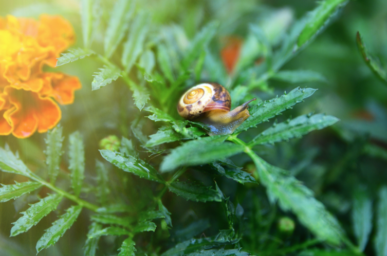 snail-marigold-memory