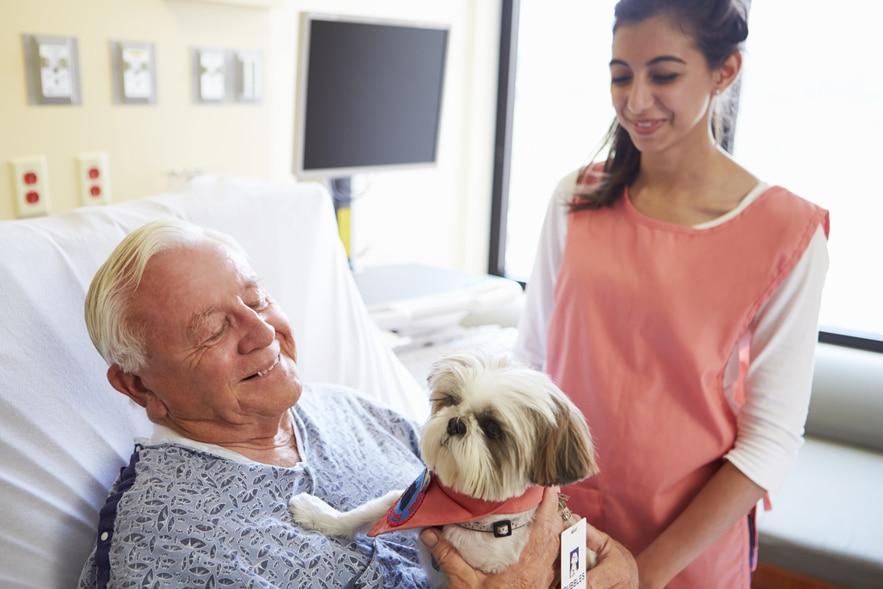 dementia-service-dogs