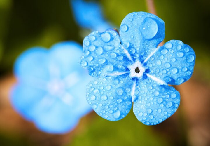 early Alzheimer's symptoms
