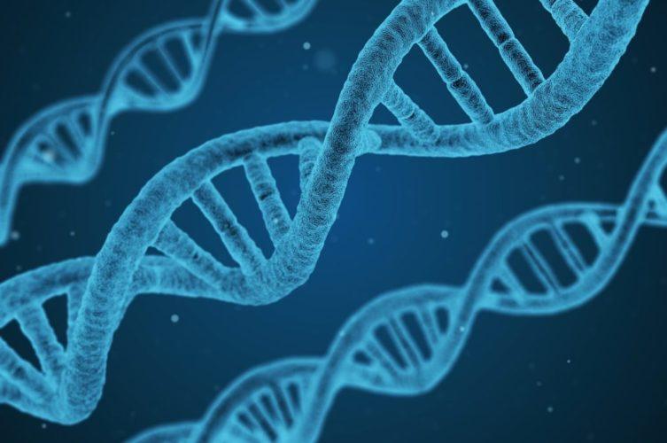 genes Alzheimer's