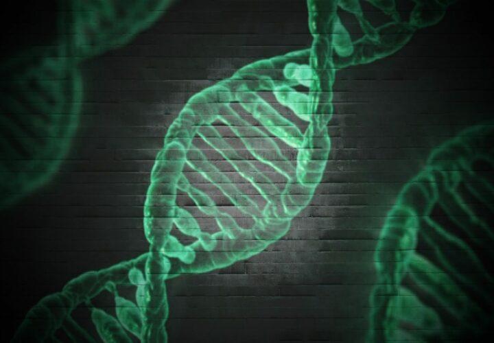 Alzheimer's gene