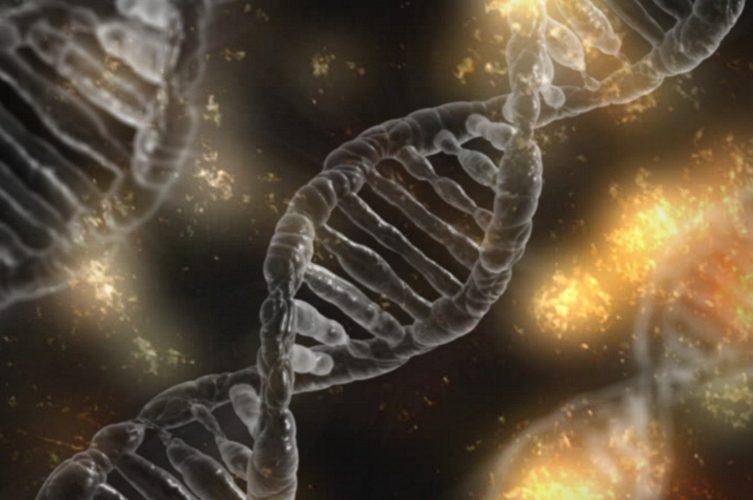APOE gene