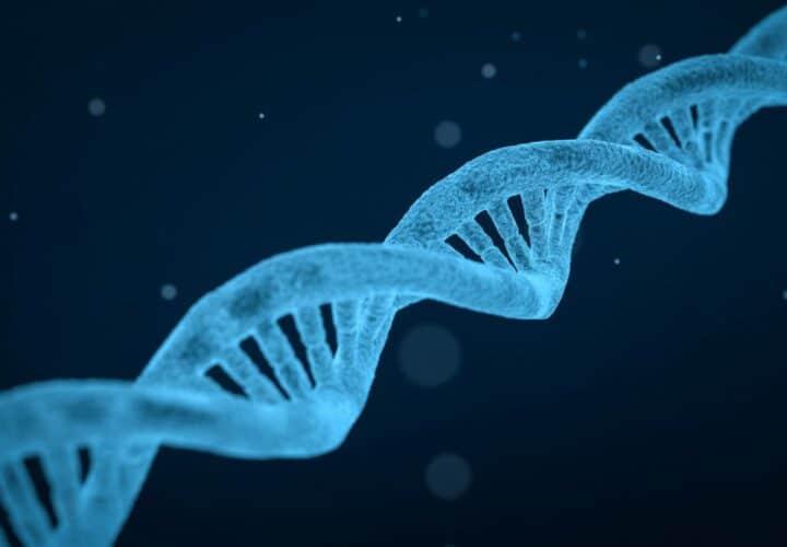 Alzheimers gene