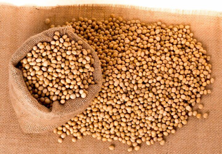 soybean oil brain