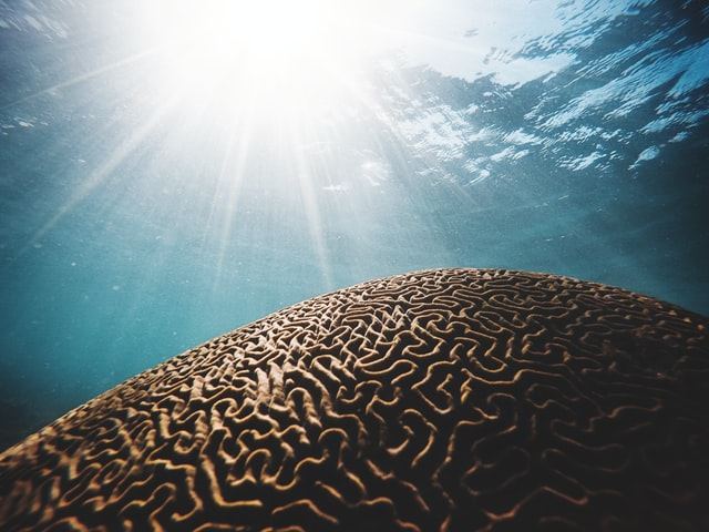 deep sea alzheimer's treatment