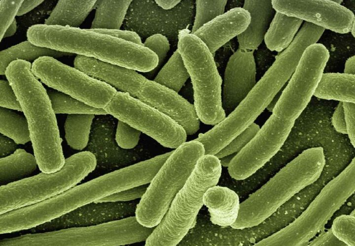 microbiome aging, microscopic organisms
